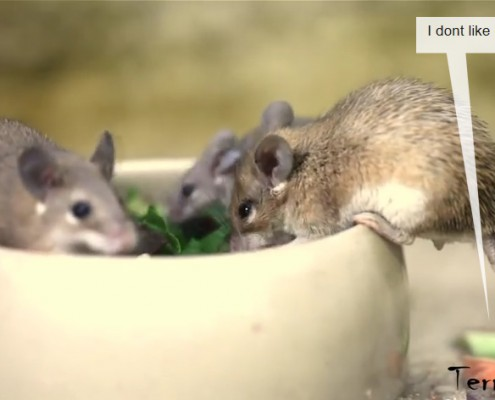 Mouse family with mom, dad and child eating together sooooo sweet!!! xD